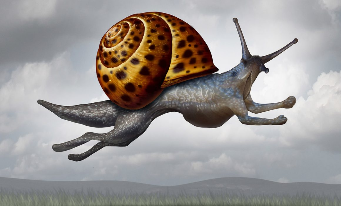 Evolving snail with legs -- a metaphor for Weber Shandwick Canada